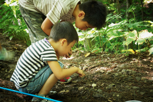 昆虫採集をする2人の男の子の写真素材 [FYI02048647]