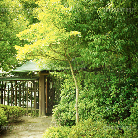 日本家屋と緑の木々の写真素材 [FYI02048686]