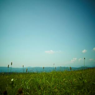 草原と青空の写真素材 [FYI02048715]
