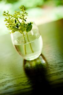 ガラスの器に活けた花の写真素材 [FYI02048751]