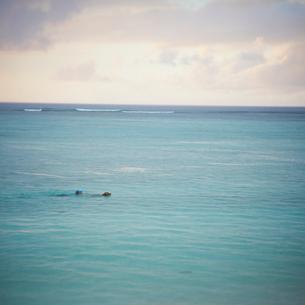 海を泳ぐイヌと男性の写真素材 [FYI02048791]
