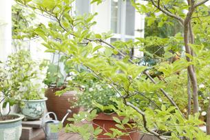 新緑の庭の写真素材 [FYI02048821]