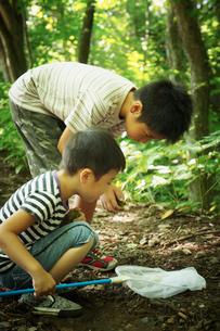 昆虫採集をする2人の男の子の写真素材 [FYI02048823]