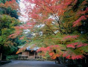 秋の中尊寺 岩手県の写真素材 [FYI02048839]