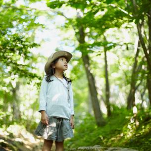 木々を見上げる女の子の写真素材 [FYI02048883]