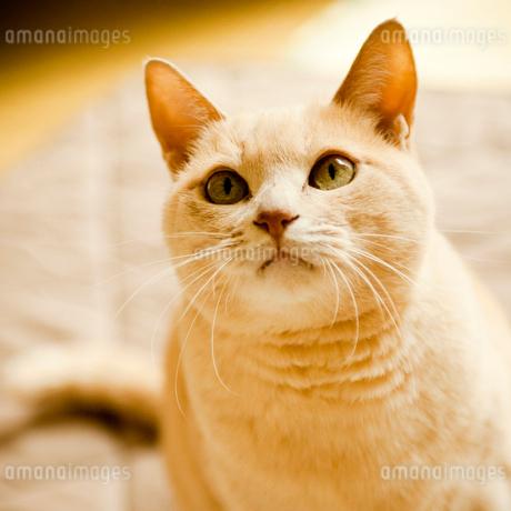 ネコの写真素材 [FYI02049087]