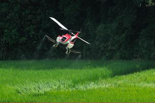 ラジコンヘリの農薬空中散布 の写真素材 [FYI02049107]