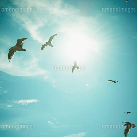 青空を飛ぶウミネコと太陽の写真素材 [FYI02049153]