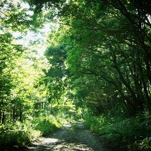 緑の森林と小道の写真素材 [FYI02049196]