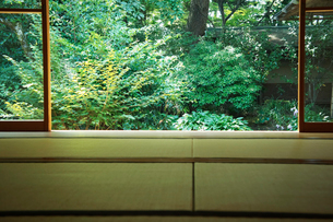 和室から見る庭の写真素材 [FYI02049310]