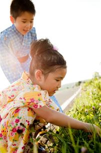 道端の草地を見る浴衣姿の女の子と男の子の写真素材 [FYI02049393]