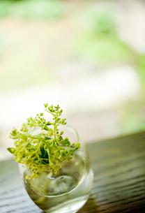 ガラスの器に活けた花の写真素材 [FYI02049528]