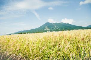 秋の田園と磐梯山の写真素材 [FYI02049757]