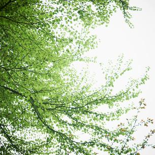 新緑の写真素材 [FYI02049764]