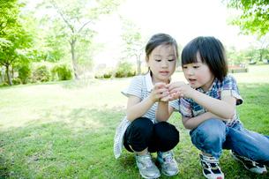 捕まえた虫を観察する男の子と女の子の写真素材 [FYI02049865]