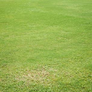 芝生の写真素材 [FYI02049932]