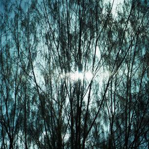 木の枝と光の写真素材 [FYI02050050]