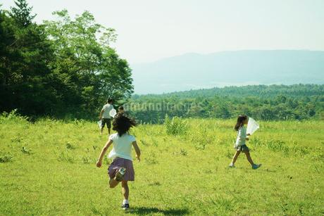 昆虫採集をする4人の子供達の写真素材 [FYI02050131]