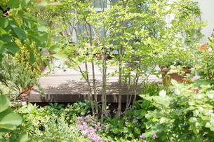 ウッドデッキのある庭の写真素材 [FYI02050272]