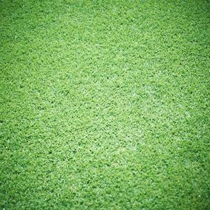 芝生の写真素材 [FYI02050432]