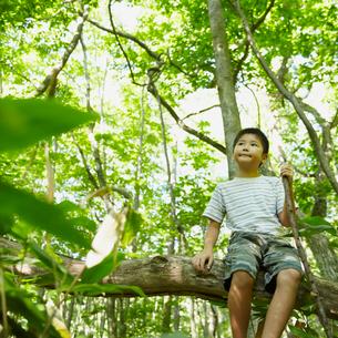 木の枝に座る男の子の写真素材 [FYI02050620]