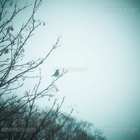 冬の木立と野鳥の写真素材 [FYI02050759]