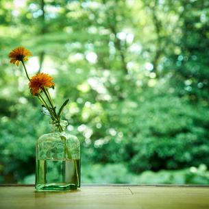 活けた花の写真素材 [FYI02050793]