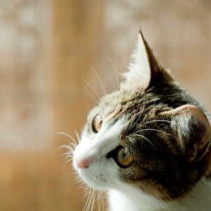 ネコの写真素材 [FYI02051057]