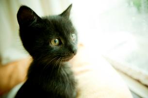 黒いネコの写真素材 [FYI02051087]