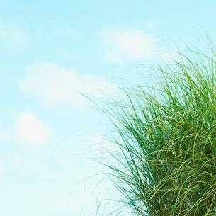 草と青空の写真素材 [FYI02051140]
