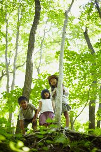 森林で下を覗く3人の子供達の写真素材 [FYI02051245]