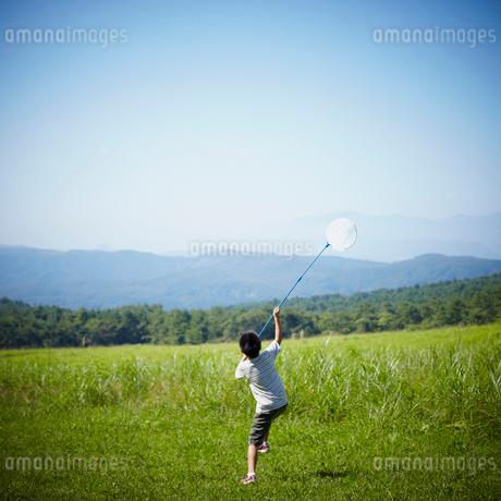 昆虫採集をする男の子の写真素材 [FYI02051340]