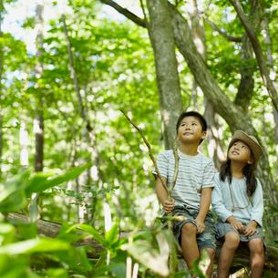 木の枝に座る男の子と女の子の写真素材 [FYI02051357]