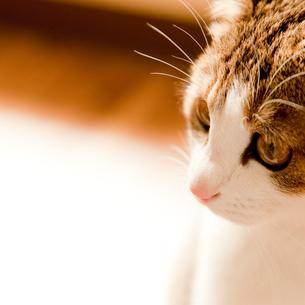 ネコの写真素材 [FYI02051680]