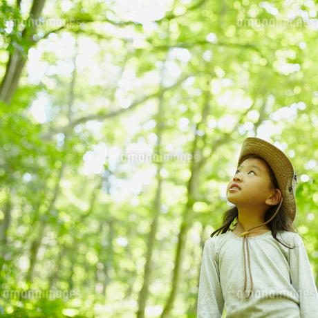 見上げる女の子の写真素材 [FYI02051779]