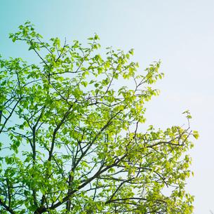 新緑の写真素材 [FYI02051871]