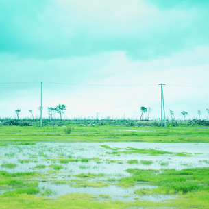 大きな水溜りと電信柱の写真素材 [FYI02051877]
