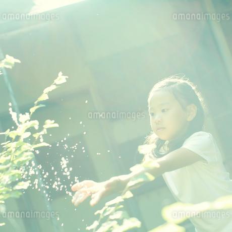 木の枝に水をかける女の子の写真素材 [FYI02051910]
