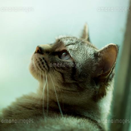 ネコの写真素材 [FYI02051919]
