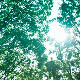 緑の木々と木漏れ日の写真素材 [FYI02051943]