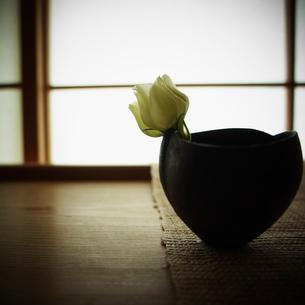 活けた白い花の写真素材 [FYI02051950]
