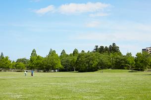新緑の公園の写真素材 [FYI02051996]