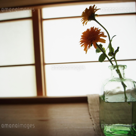 活けた花の写真素材 [FYI02052039]