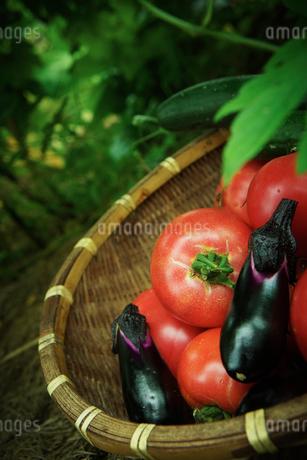 ザルの上のトマトとナスとキュウリの写真素材 [FYI02052067]
