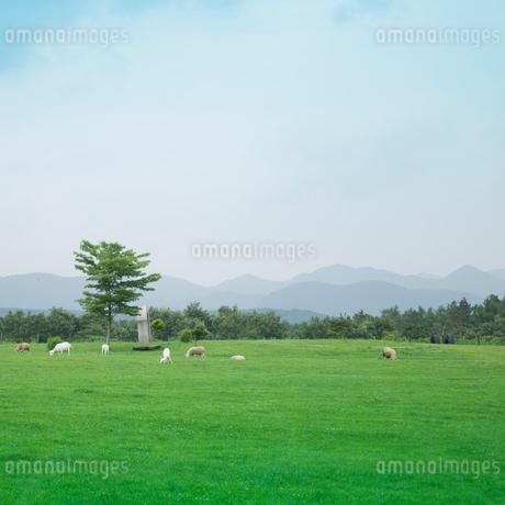 牧場の写真素材 [FYI02052087]