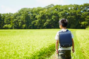 畦道を歩くランドセルを背負った男の子の写真素材 [FYI02052127]