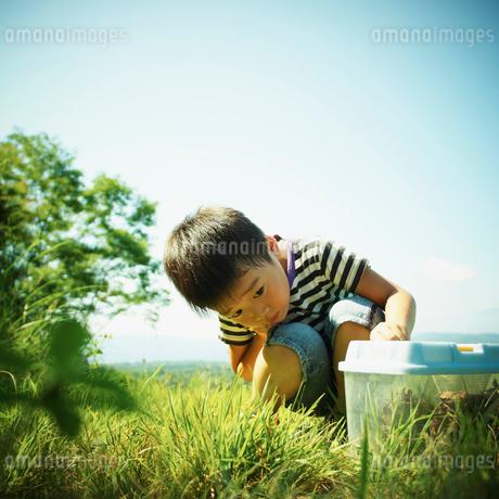 虫かごを見る男の子の写真素材 [FYI02052168]