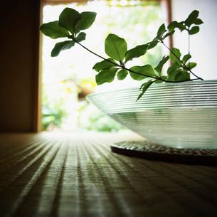 ガラスの花器に生けた葉の写真素材 [FYI02052203]
