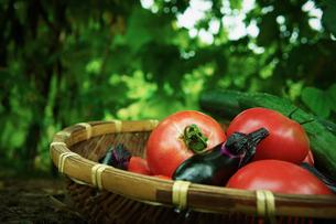 ザルの上のトマトとナスとキュウリの写真素材 [FYI02052206]