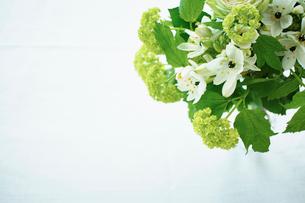 グリーンと白の花束の写真素材 [FYI02052537]